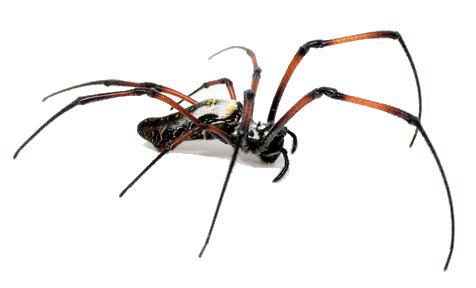 Boutique d'élevage et de ventes d'insectes arachnides à Anzin