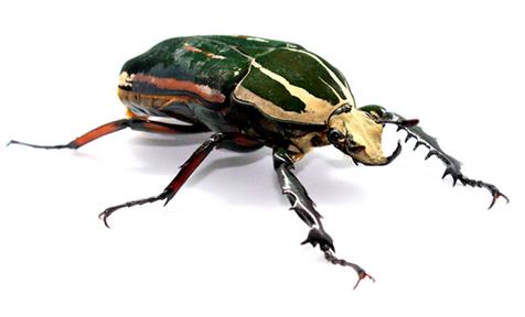 Boutique d'élevage et de ventes d'insectes, coléoptères à Anzin