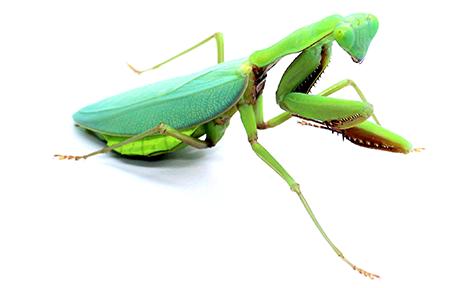 Boutique d'élevage et de ventes d'insectes, mantes à Anzin